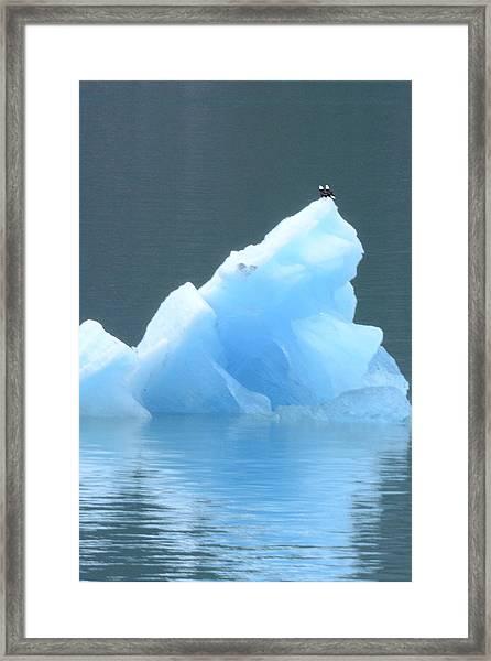 Eagles On Ice Framed Print
