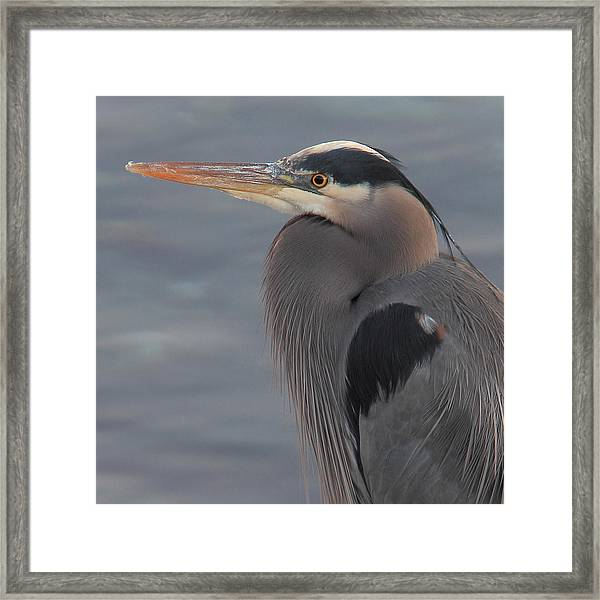 Framed Print featuring the photograph Early Bird 2 by Randy Hall