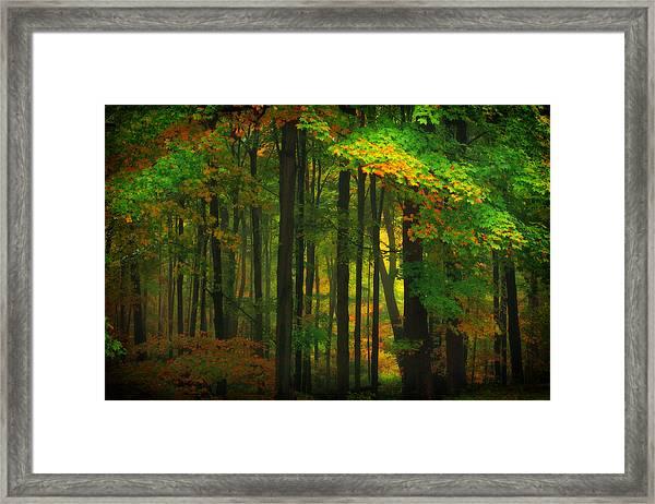 Early Fall 4 Framed Print
