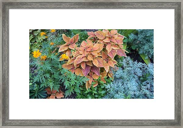 Early Fall Framed Print