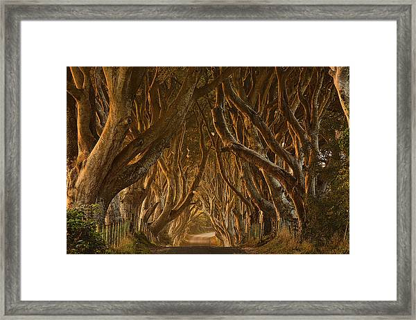 Early Morning Dark Hedges Framed Print by Derek Smyth