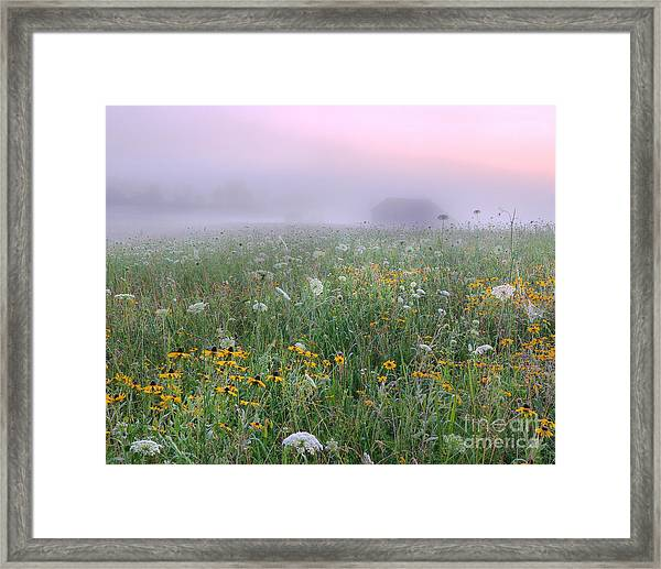 Early Morning Meadow Framed Print