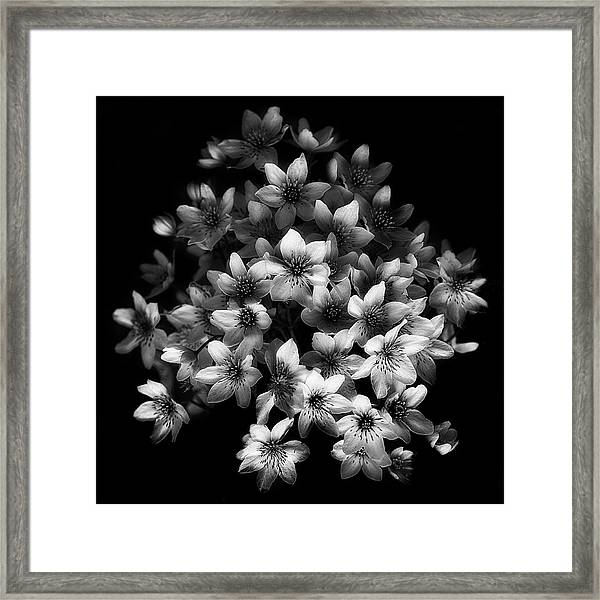 Early Sensation Framed Print