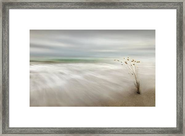 Ears In The Sea Framed Print