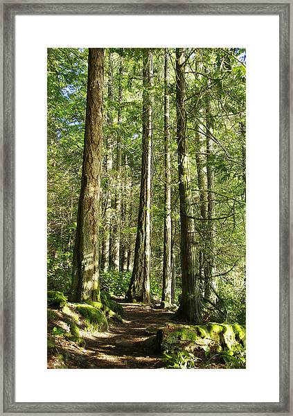 East Sooke Park Trail Framed Print