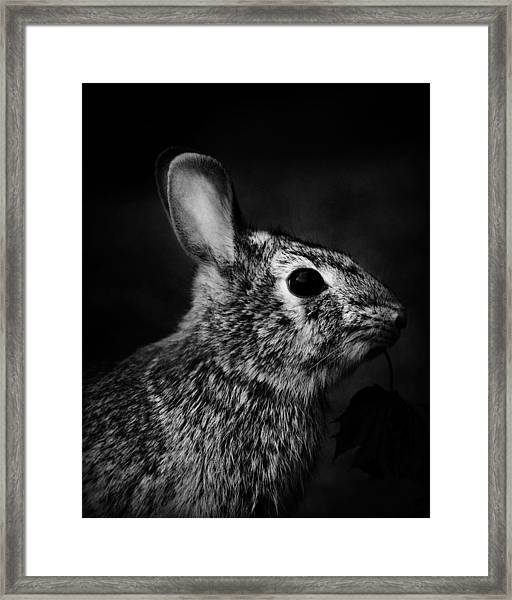 Eastern Cottontail Rabbit Portrait Framed Print