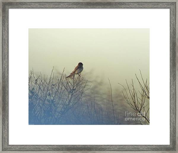 Eastern Phoebe Lacassine Pool  Lacassine Nwr Framed Print