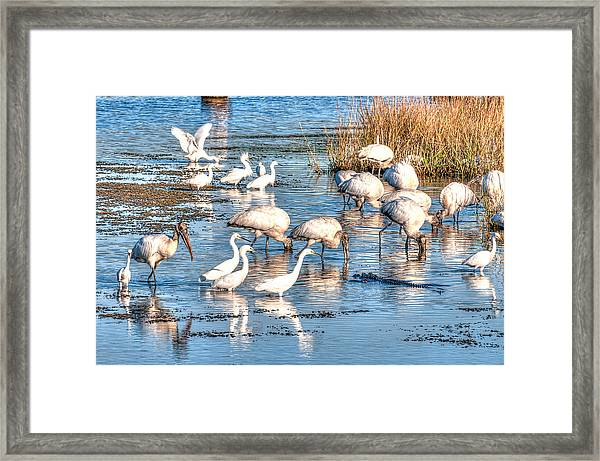 Eating With Caution Framed Print