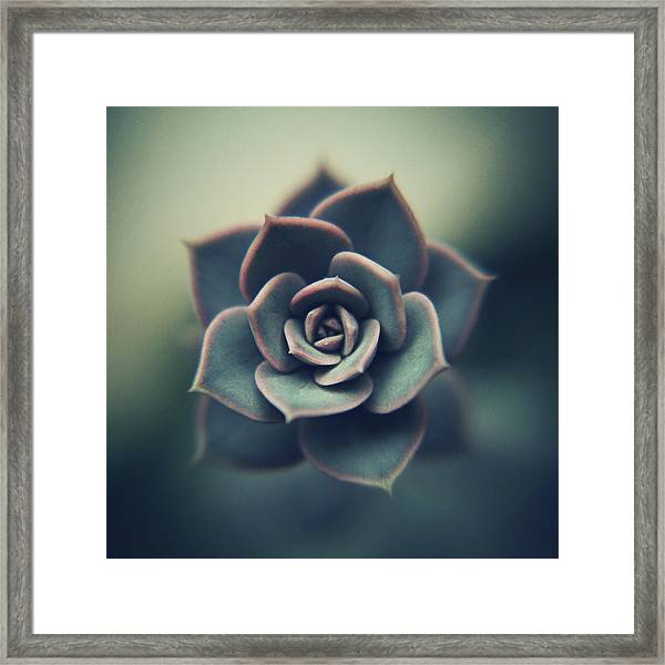 Echeveria Macro Framed Print by Con Ryan