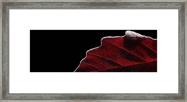 Edge Of Autumn Framed Print