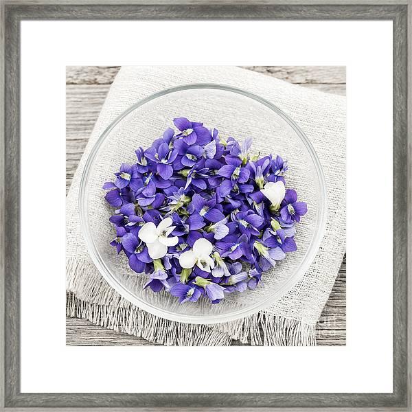 Edible Violets  Framed Print