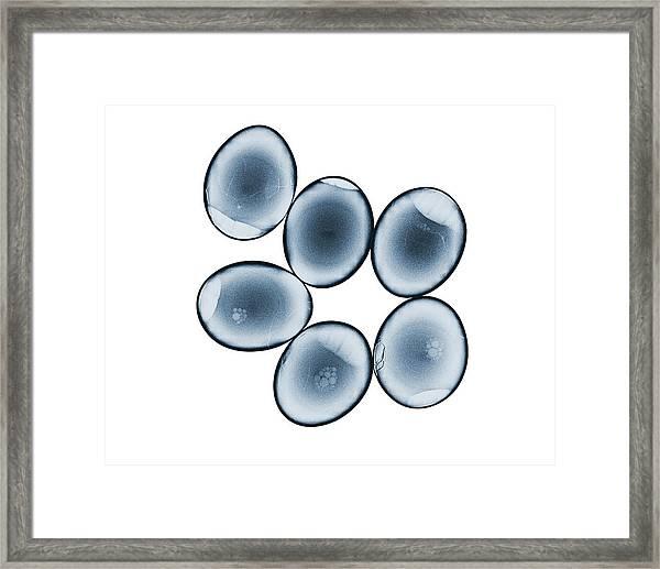 Eggs Framed Print by Brendan Fitzpatrick