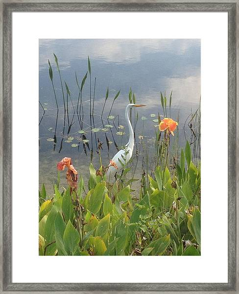 Framed Print featuring the photograph Egret And Iris by Barbara Von Pagel