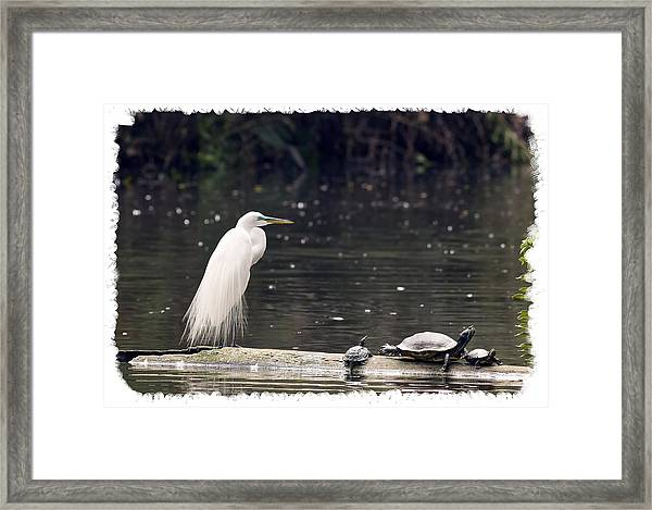 Egret And Turtles Framed Print