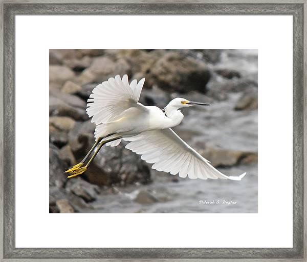 Egret Flight Framed Print