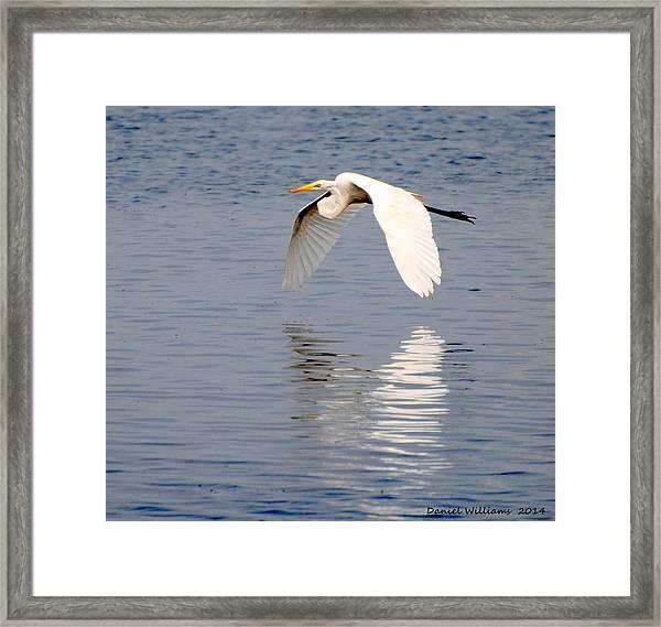 Egret Flying At Harkers Island Framed Print