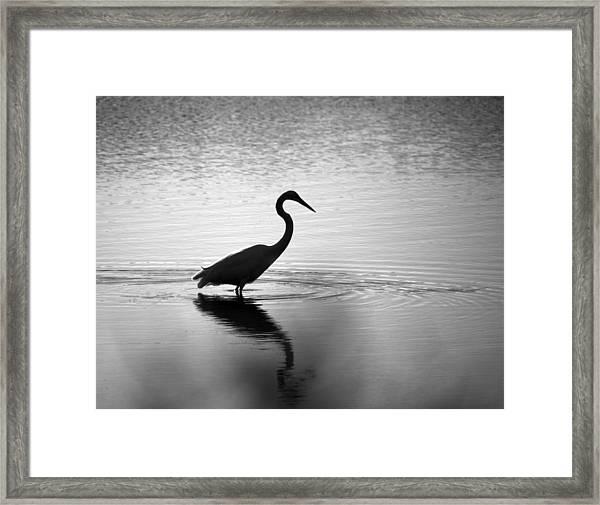 Egret In Bw Framed Print