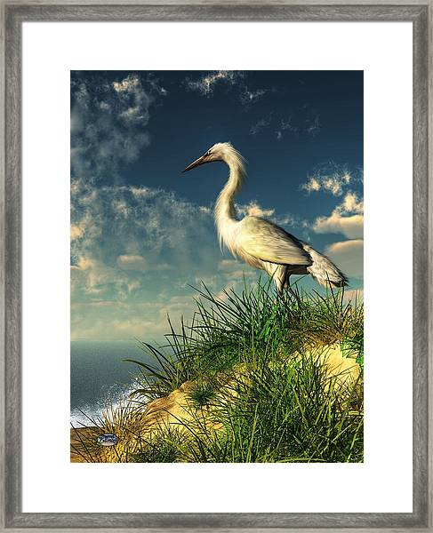 Egret In The Dunes Framed Print