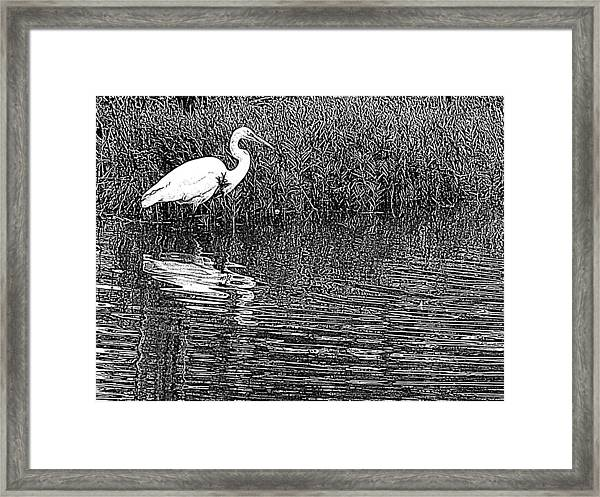 Egret In The Thicket Framed Print