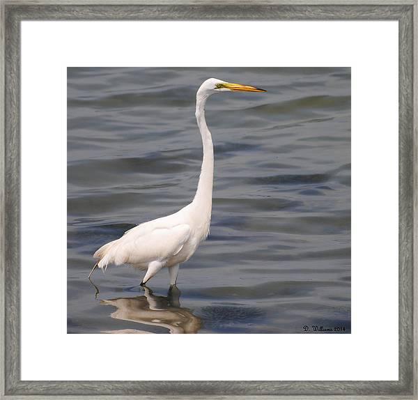 Egret On Alert Framed Print