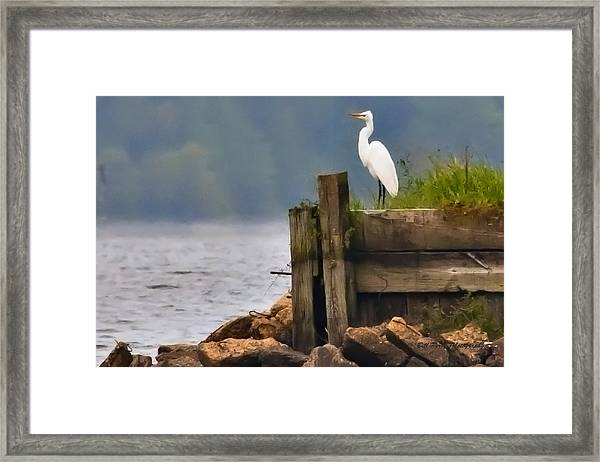 Egret On Dock Framed Print by Bill Perry