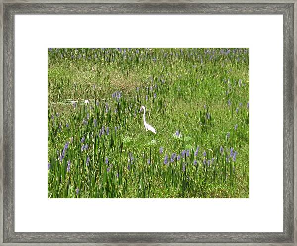 Framed Print featuring the photograph Egret On The Lake by Barbara Von Pagel