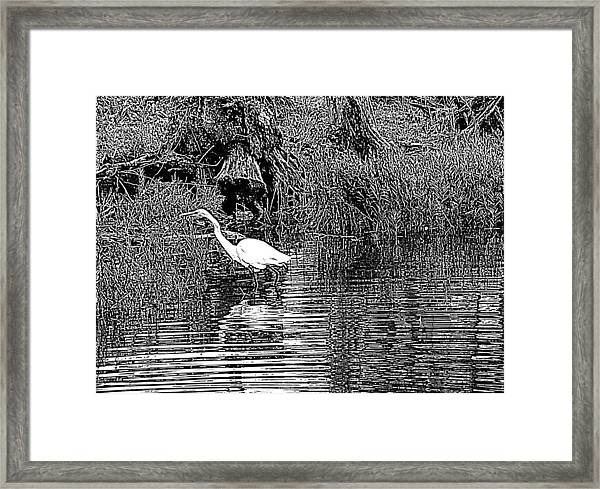 Egret On The Move Framed Print