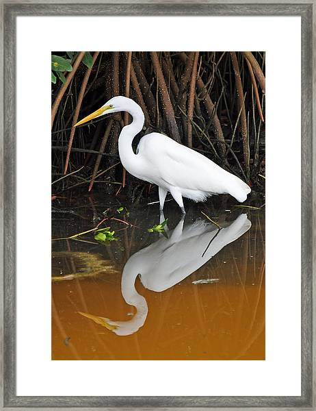 Egret Reflected In Orange Waters Framed Print