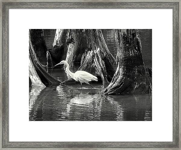 Egret Solitude Framed Print