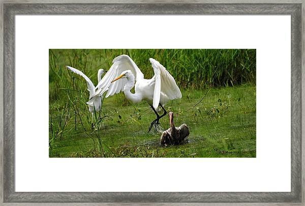 Egrets Taking Flight Framed Print