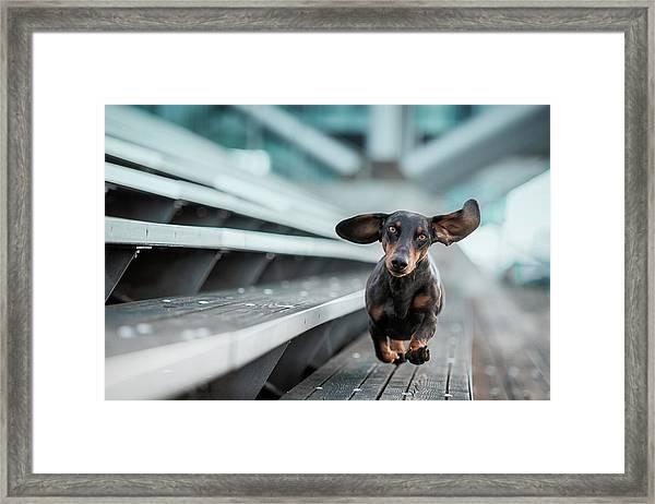 Ein Kleiner Hund La?uft Durch Die Welt.... Framed Print