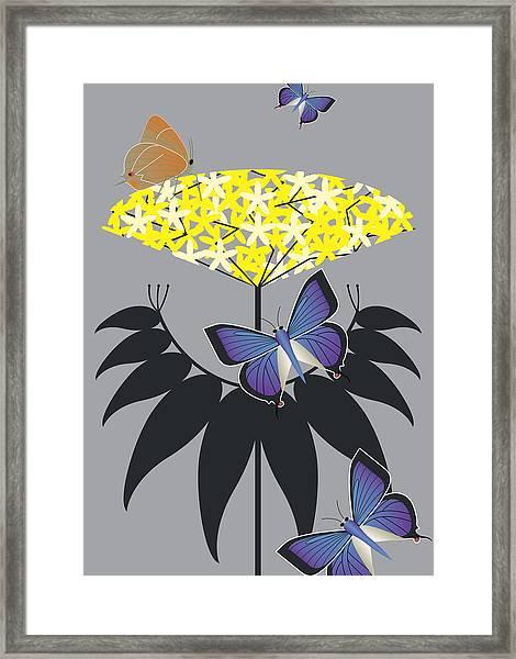 Elderberry Framed Print