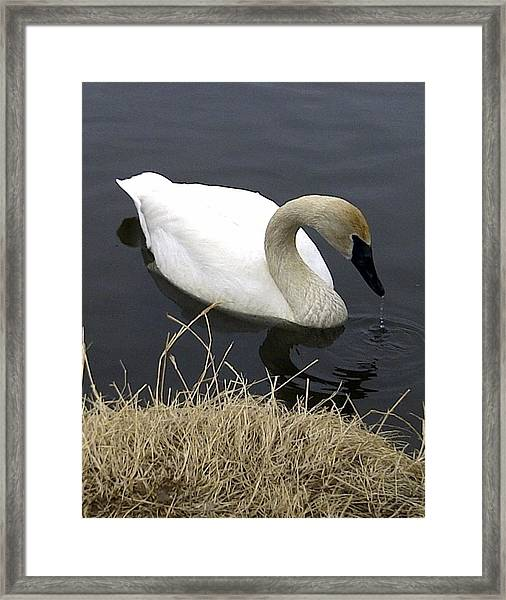 Framed Print featuring the photograph Elegance by Gigi Dequanne