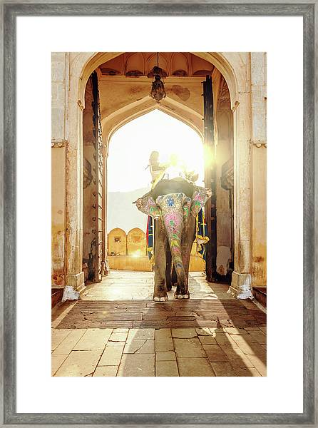 Elephant At Amber Palace Jaipur,india Framed Print