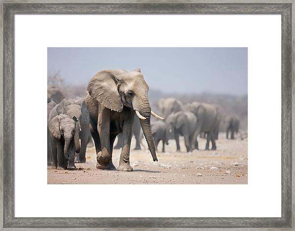 Elephant Feet Framed Print