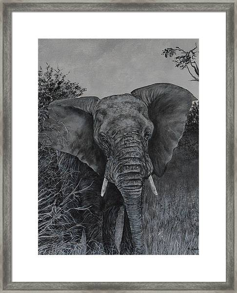 Elephant In African Preserve Framed Print