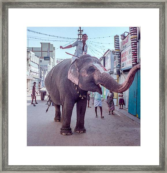 Elephant In The Street In India Framed Print