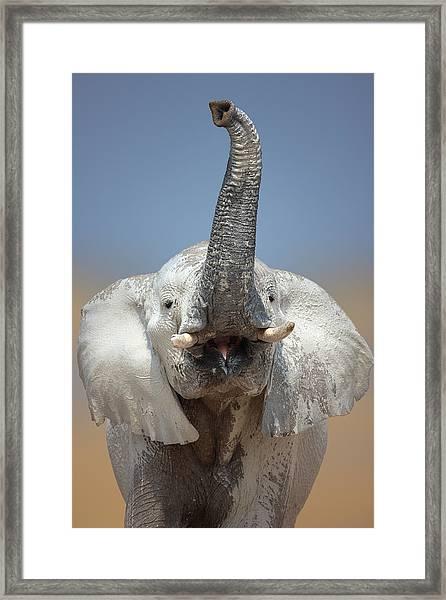 Elephant Portrait Framed Print