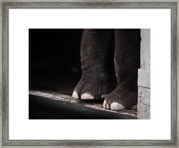 Elephant Toes Framed Print