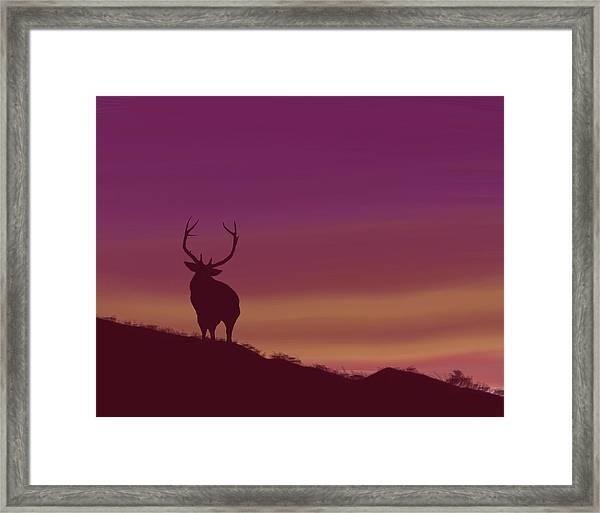 Elk At Dusk Framed Print