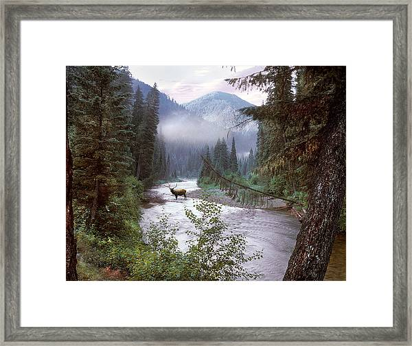 Elk Crossing 2 Framed Print