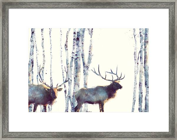 Elk // Follow Framed Print