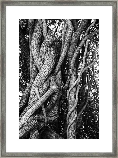 Embracing Rooted Love Framed Print by Luna Curran
