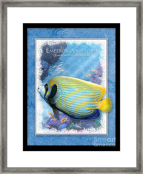 Emperor Angelfish Framed Print