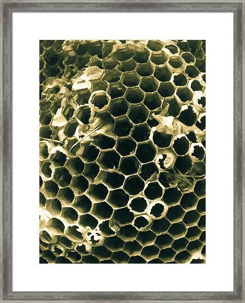 Empty Nest Framed Print