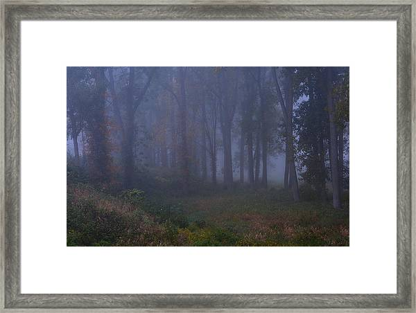 Enchanted Forest Two Framed Print