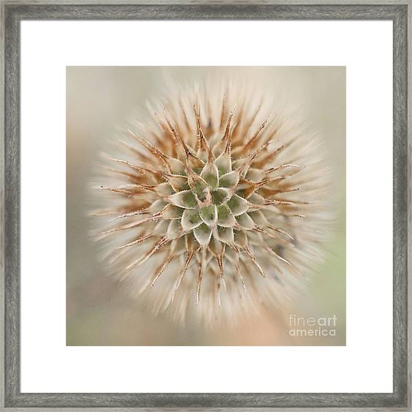Enchanted Thistle Framed Print