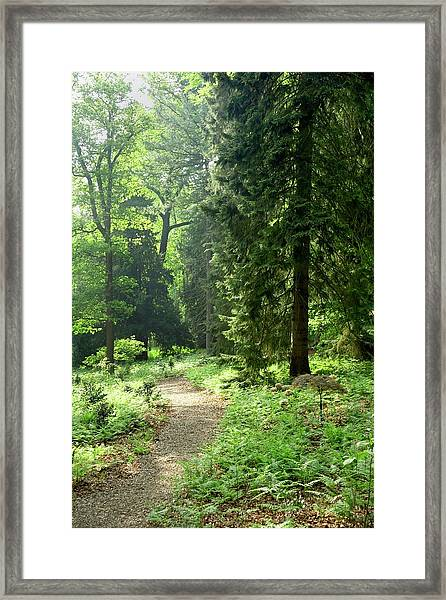 Enchanted Wood Framed Print