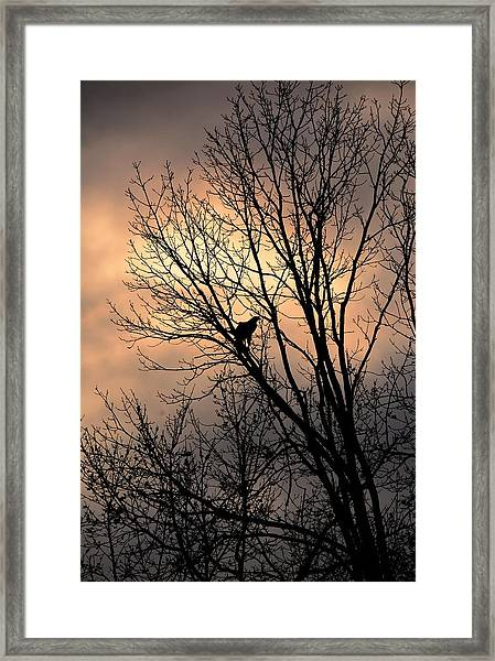 End Of The Day  Red Tailed Hawk Framed Print