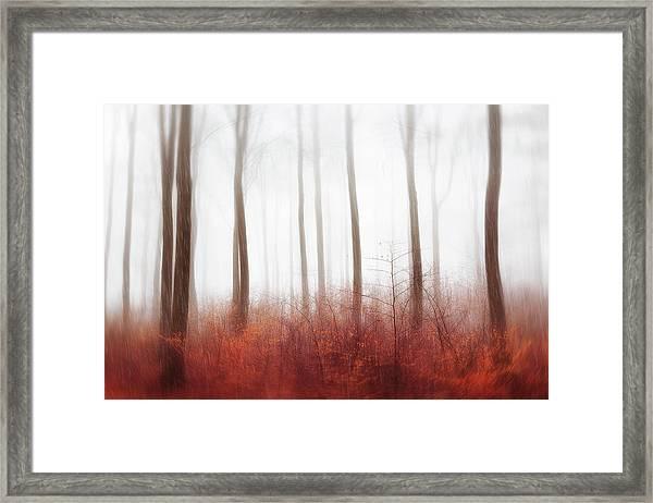 Endless Woods Framed Print